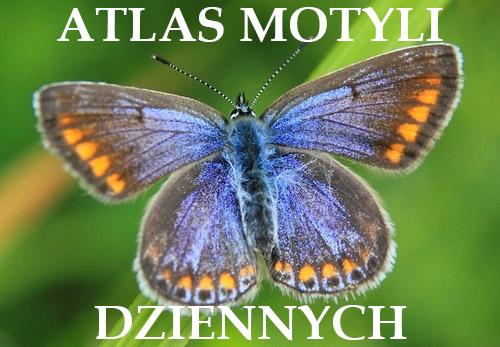 Atlas Motyli Dziennych